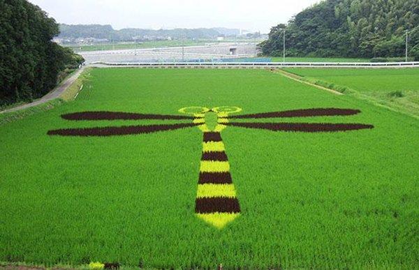 japanese-rice-murals_5