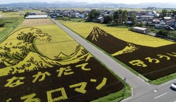 Agricultural Art: Japanese Rice Murals