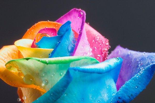 happy-roses_6
