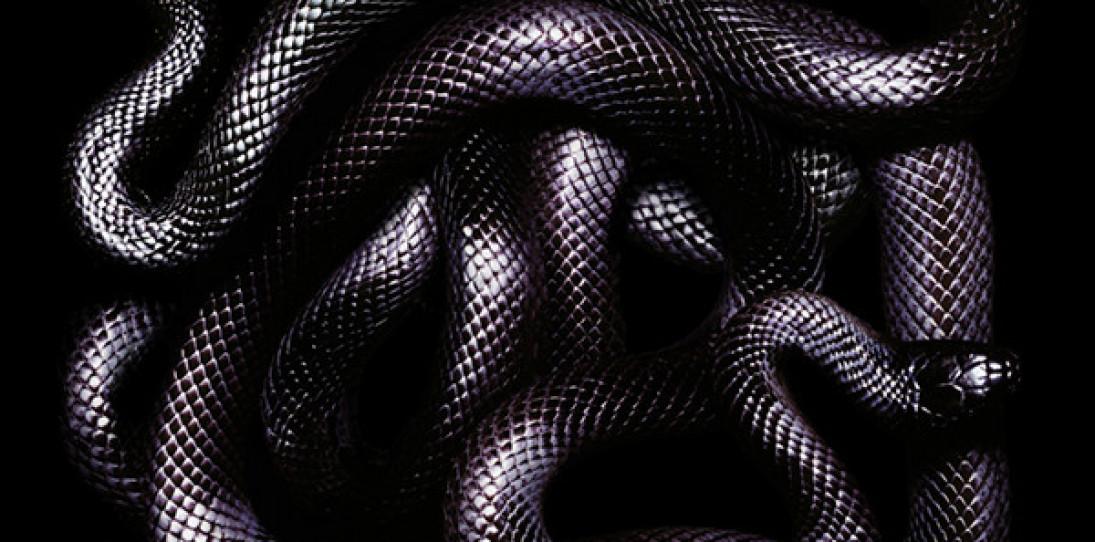 The Serpentine Art of Guido Mocafico