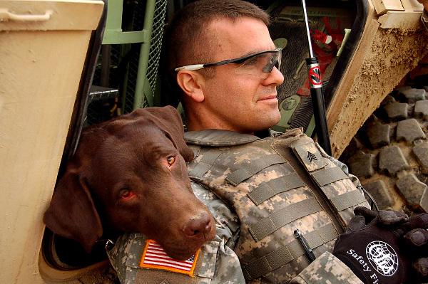 dogs of war 2 Canine Heroes: a Tribute to Dogs in Service