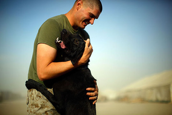 dogs-of-war_4