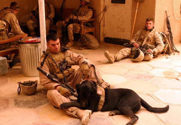 dogs-of-war_6