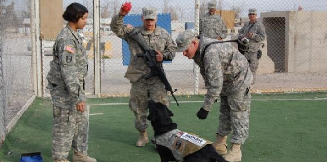 Canine Heroes: a Tribute to Dogs in Service