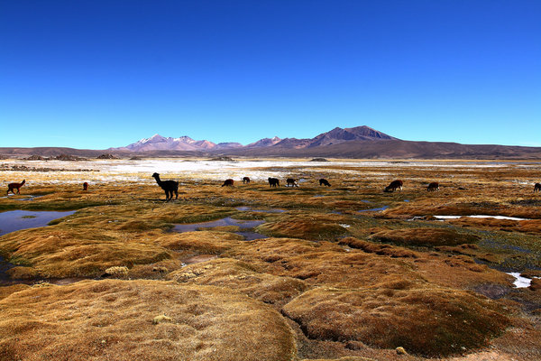 chile-north-to-south-by-galen-brown_1
