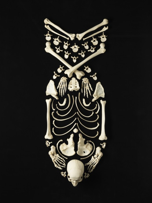 francois-robert-bone-art_8