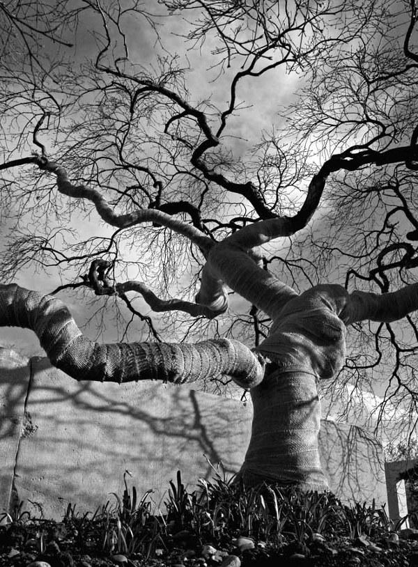 tree-museum_2