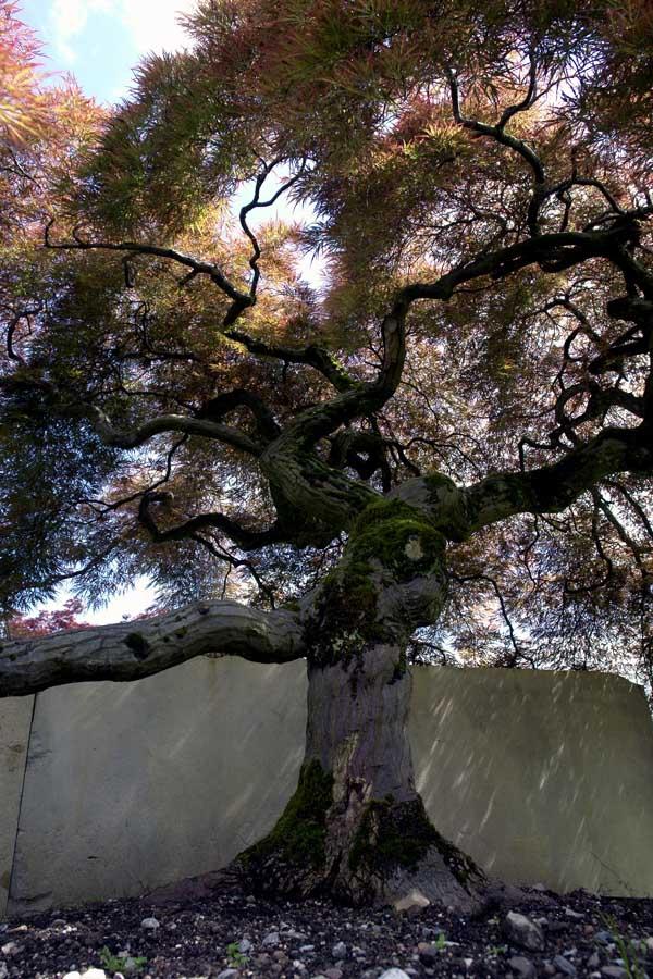 tree-museum_4