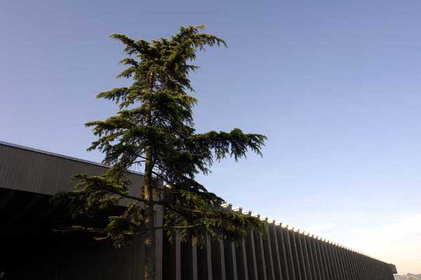 tree-museum_8