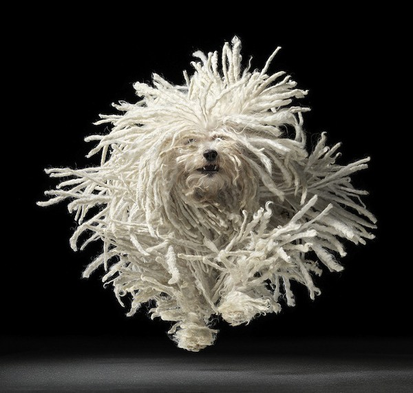 Dog Photography by Tim Flach 1 Dog Portrait Photography by Tim Flach