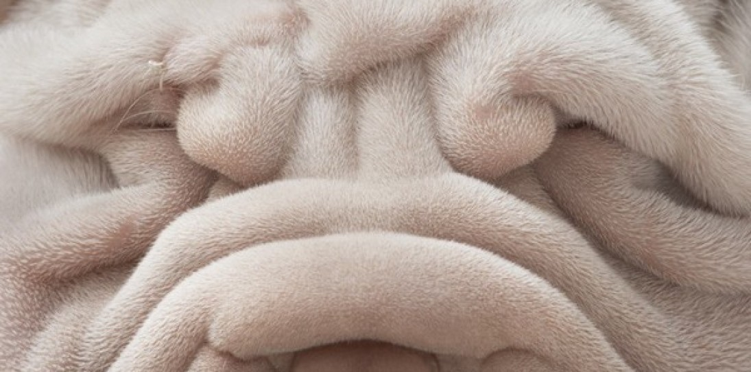 Dog Portrait Photography by Tim Flach