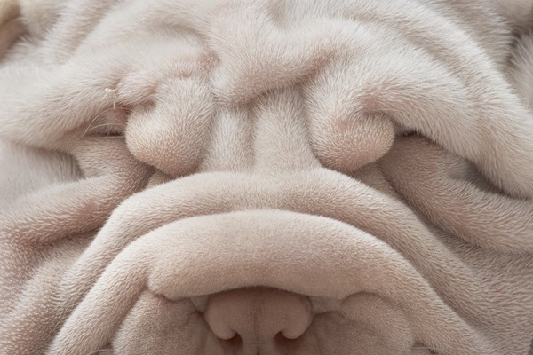 Dog Photography by Tim Flach 12