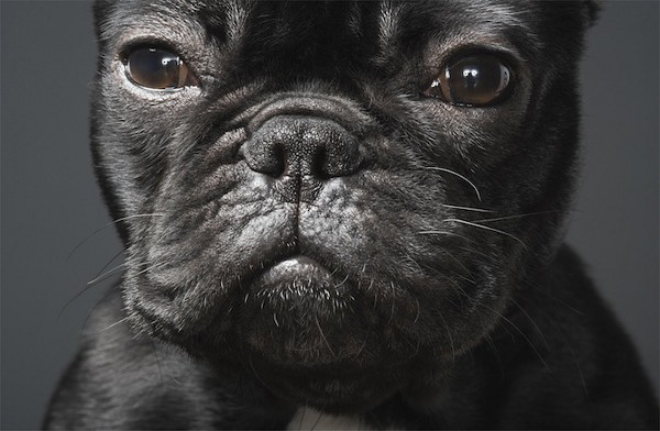 Dog Photography by Tim Flach 3
