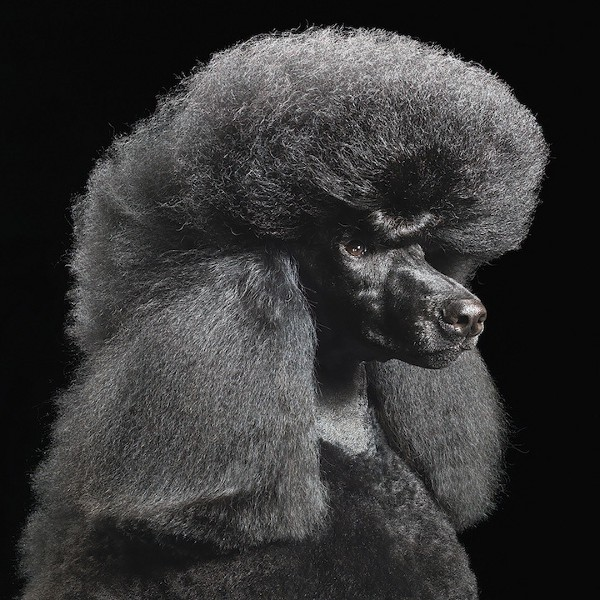 Dog Photography by Tim Flach 5