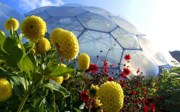 Eden Project World's Largest Greenhouse 12