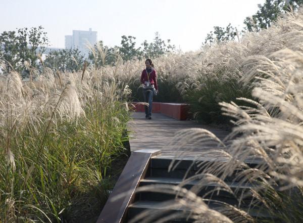 Shanghai Houtan Park 5