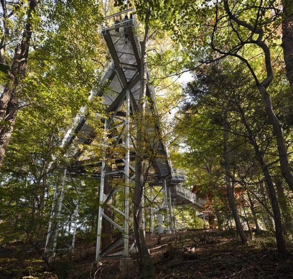 Morris Arboretum Tree Adventure 2