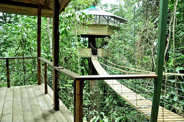 Finca Bellavista Treehouse Community 1