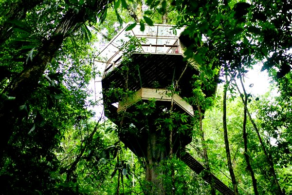 Finca Bellavista Treehouse Community 5 Treehouse Living: Finca Bellavista, Costa Rica
