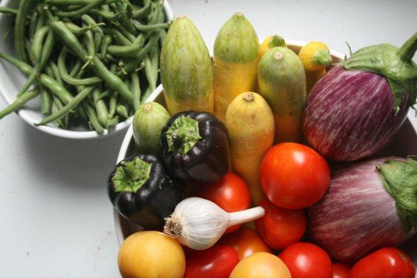 Organic Vegetable Garden 1