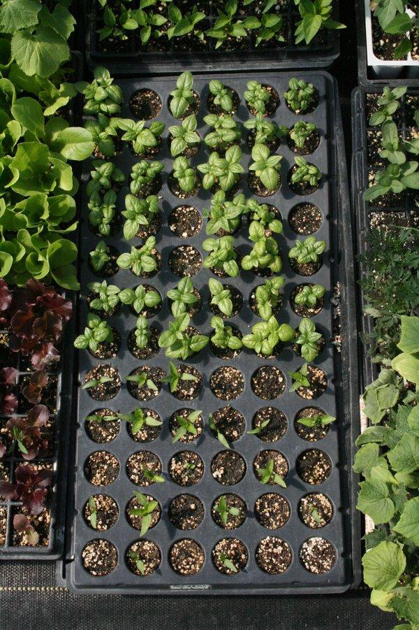Organic Vegetable Garden 3