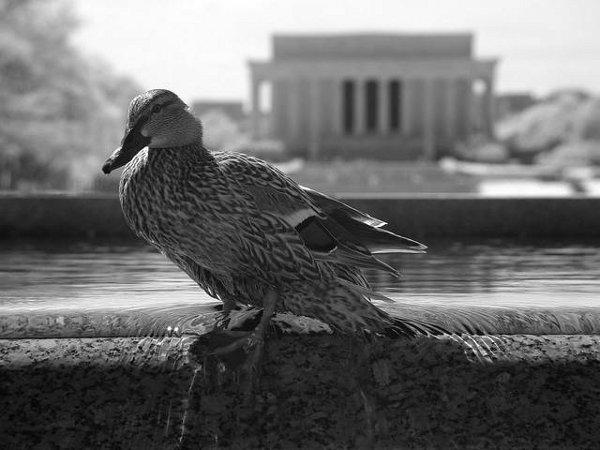 Washington DC Photography by Zach Stern 4