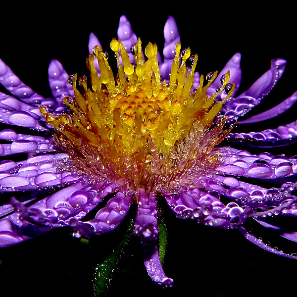 Flower Photography 2
