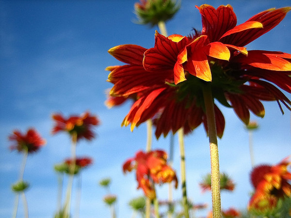 Flower Photography 6