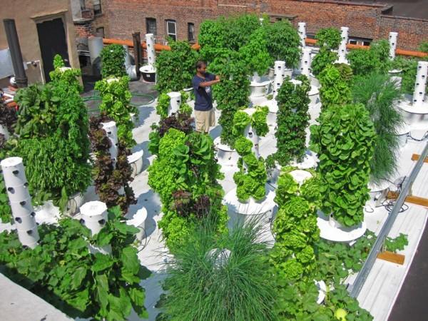 Vertical Hydroponic Gardening 1