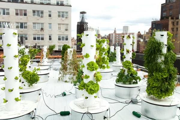 Vertical Hydroponic Gardening 3
