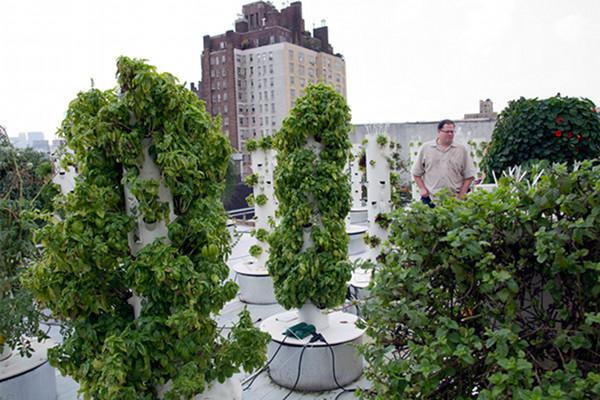 Rooftop Hydroponic Garden 2
