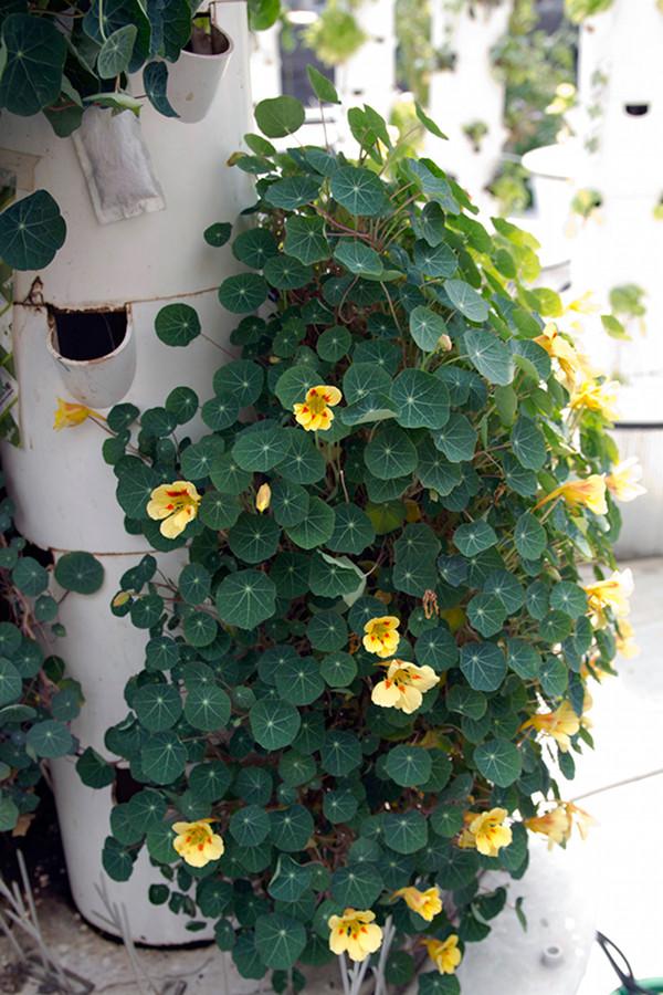 Rooftop Hydroponic Garden 4