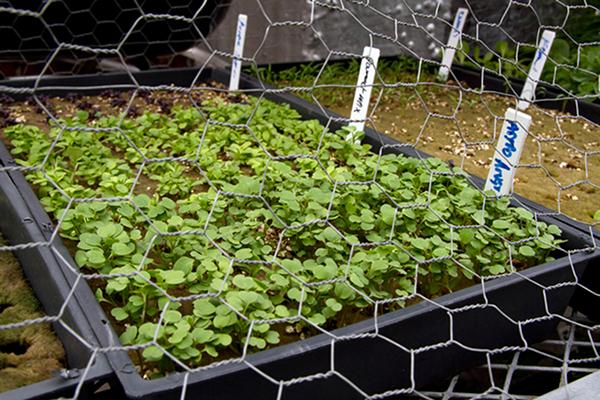 Rooftop Hydroponic Garden 5