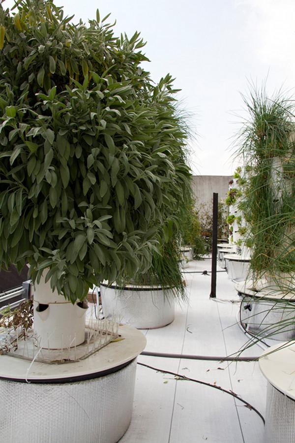 Rooftop Hydroponic Garden 7