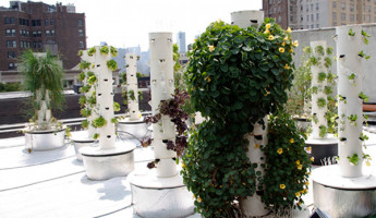 Rooftop Hydroponic Garden NYC