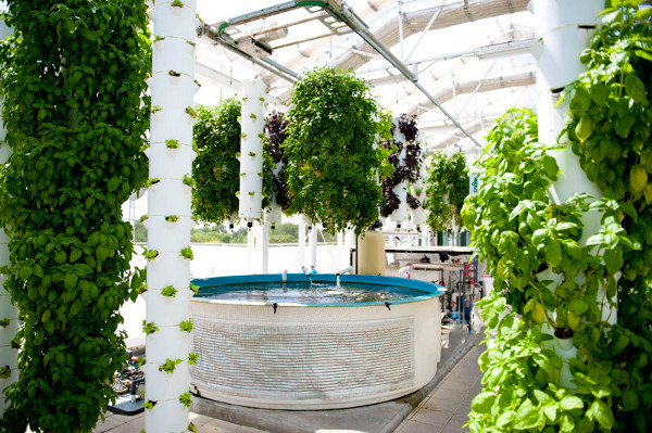 Green Sky Growers 1 Future Farming: How High Tech Aquaponics Makes Food Right