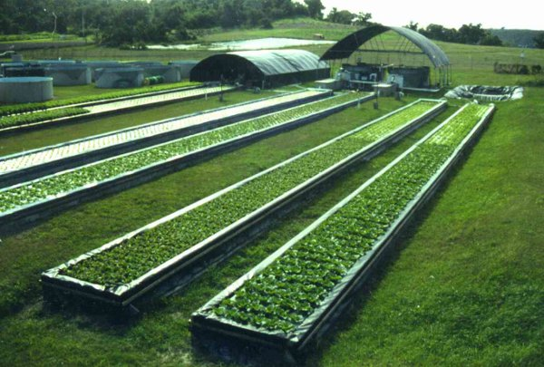 UVI Aquaponics Future Farming: How High Tech Aquaponics Makes Food Right
