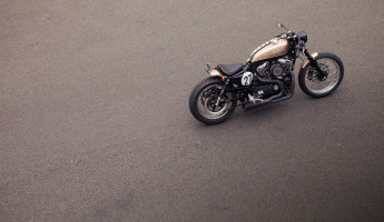 Bald Terrier 1200 by Deus Ex Machina