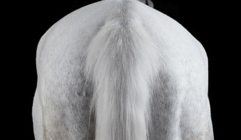 Portraits of Horses by Peter Samuels