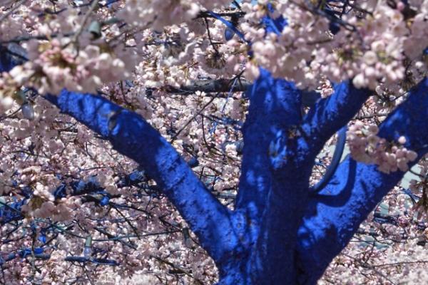 blue trees 4
