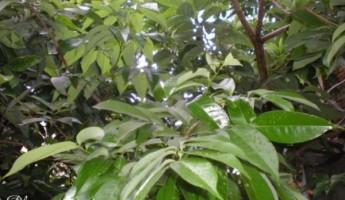 subtropical Indian Rainforest e1333391129849 3 345x200 Man Single Handedly Plants 1400 Acre Forest