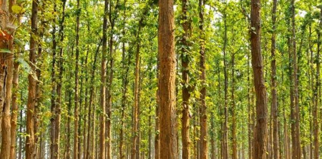 Man Single-Handedly Plants 1400 Acre Forest