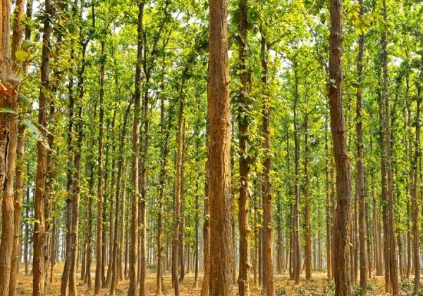 subtropical forest india 1 Man Single Handedly Plants 1400 Acre Forest