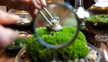 Tiny World Terrariums by Twig Terrariums