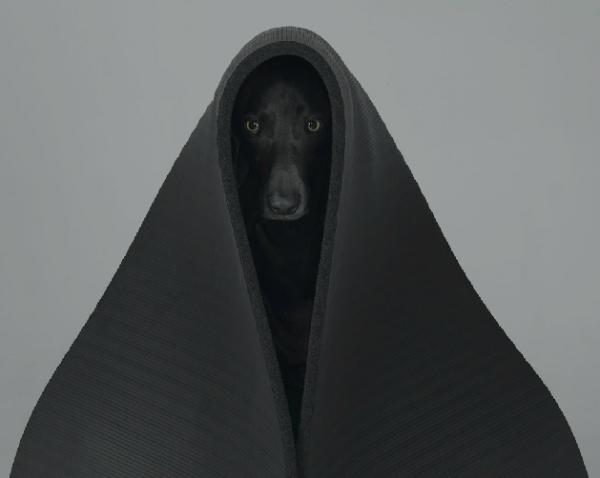 william-wegman-dog-portraits-2