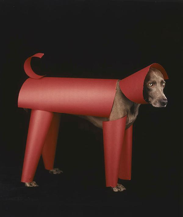 william wegman dog portraits 5 Dog Portraits by William Wegman