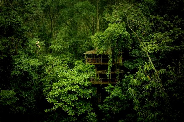 Finca Bellavista Treehouse Community 2 Extraordinary Ecotourism: 7 Excellent Earthly Escapes