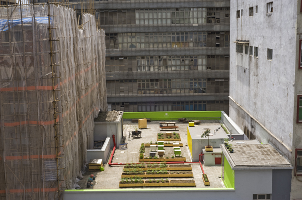 HK Farm Hong Kong  Rooftop Farming: the Next American Frontier