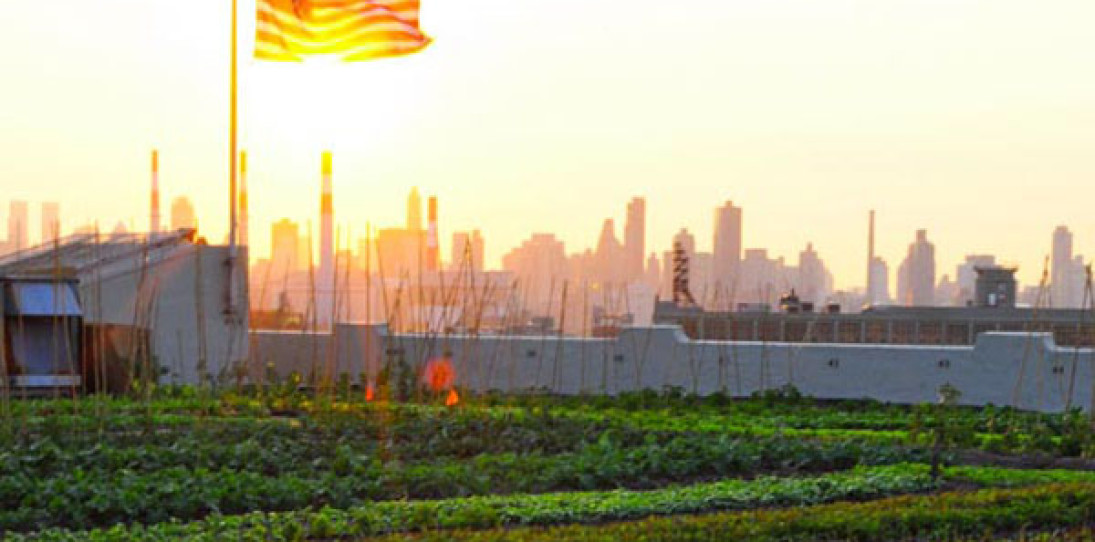 Rooftop Farming: the Next American Frontier