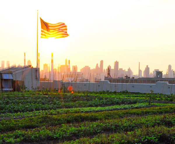 rooftop farms  Rooftop Farming: the Next American Frontier